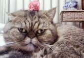 バラの似合う猫