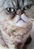 モデル立ち猫