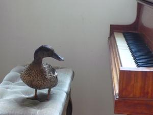このピアノ。食える?