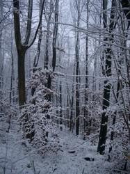 雪は本当に美しい