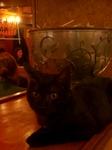 黒猫に見つめられるとドキッとするのは私だけ?