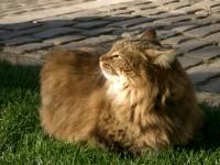 パリの猫ちゃん。この子がデブでかわいかった~
