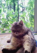 やたら腰の重い猫